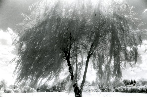 Wind Trembling Willow World,  1988