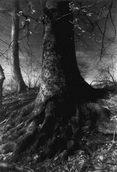The Mended Tree,  1989
